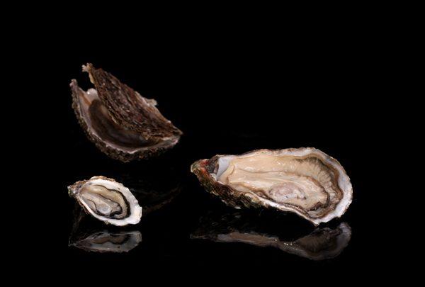 Le(s) bar à huîtres de Garry Dorr