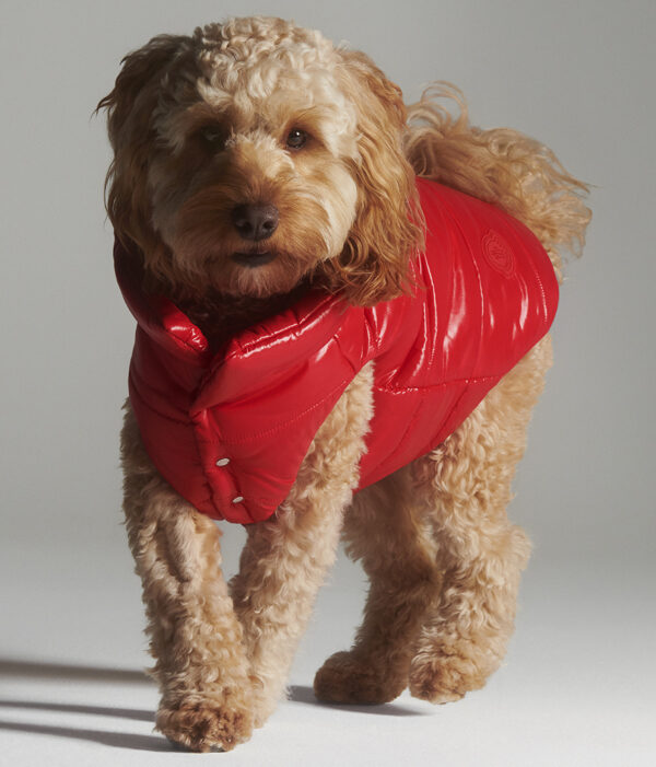 MONCLER_POLDO_DOG_COUTURE_EDITORIAL_IMAGES_CHARLOTTE_WALES