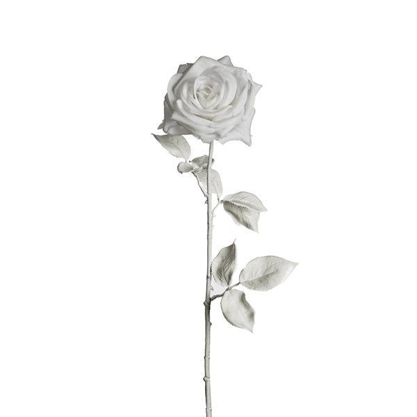 SIA - Rose blanche par Olivier Lapidus - 18.90€