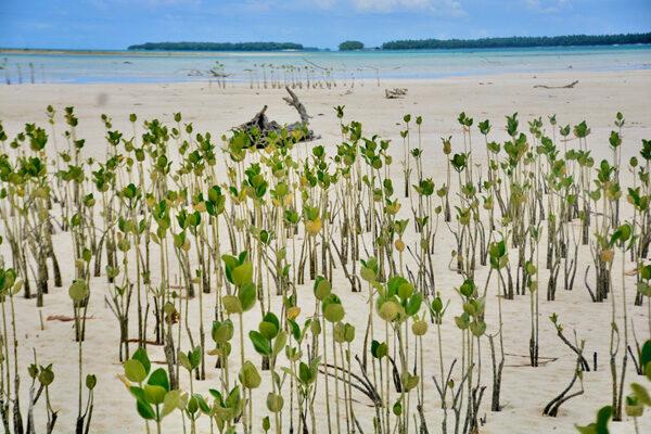 DoDo Mangroves