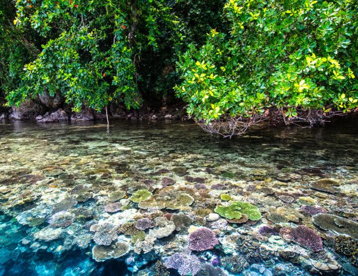 Pour la protection des mangroves
